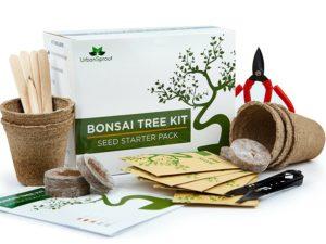 bonsai züchten , bonsai baum züchten