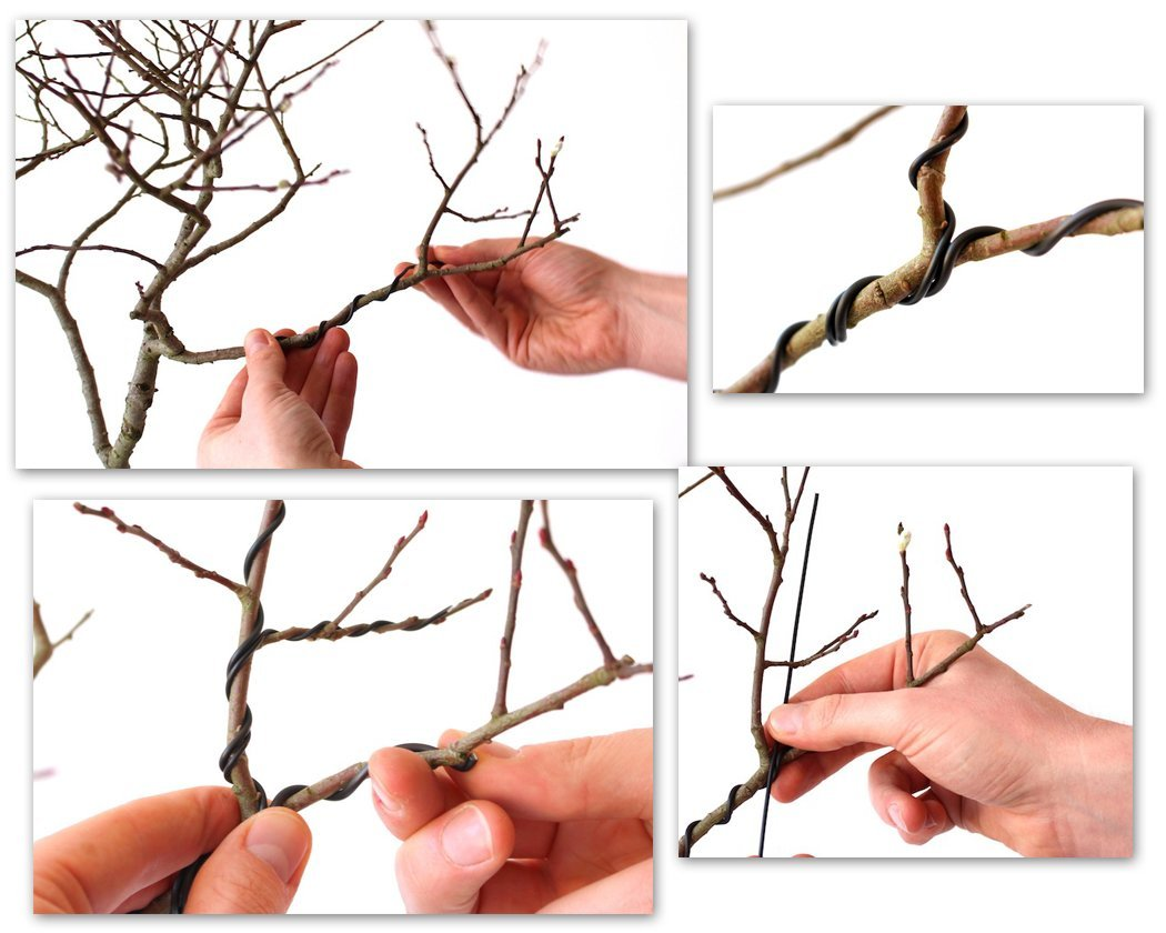 Bonsai Baum kaufen - gestalten