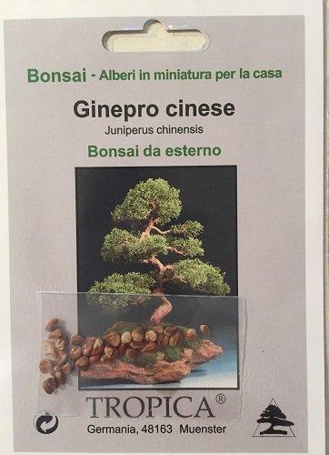 aus Samen einen Bonsai züchten