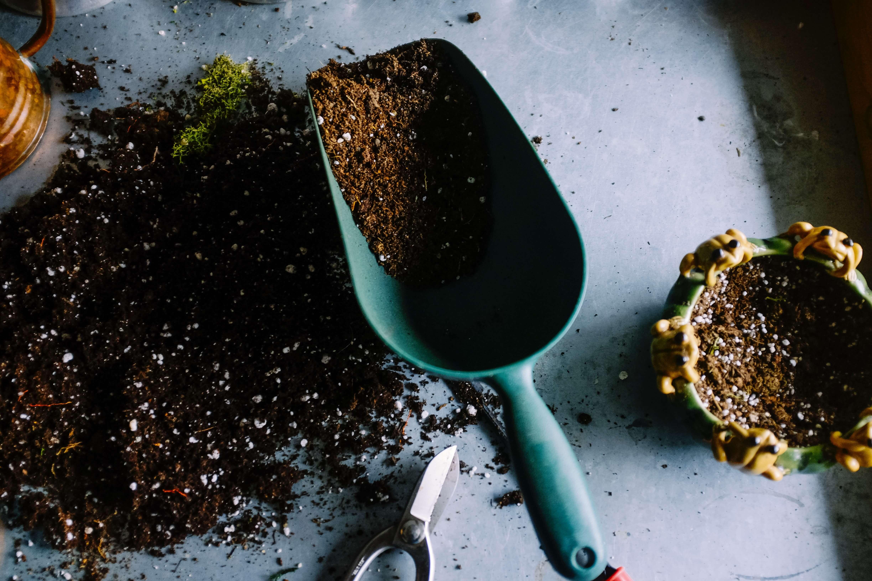 Bonsai Baum kaufen - selbst züchten