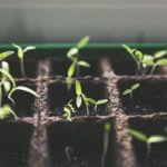 Bonsai züchten - den eigenen Bonsai Baum züchten