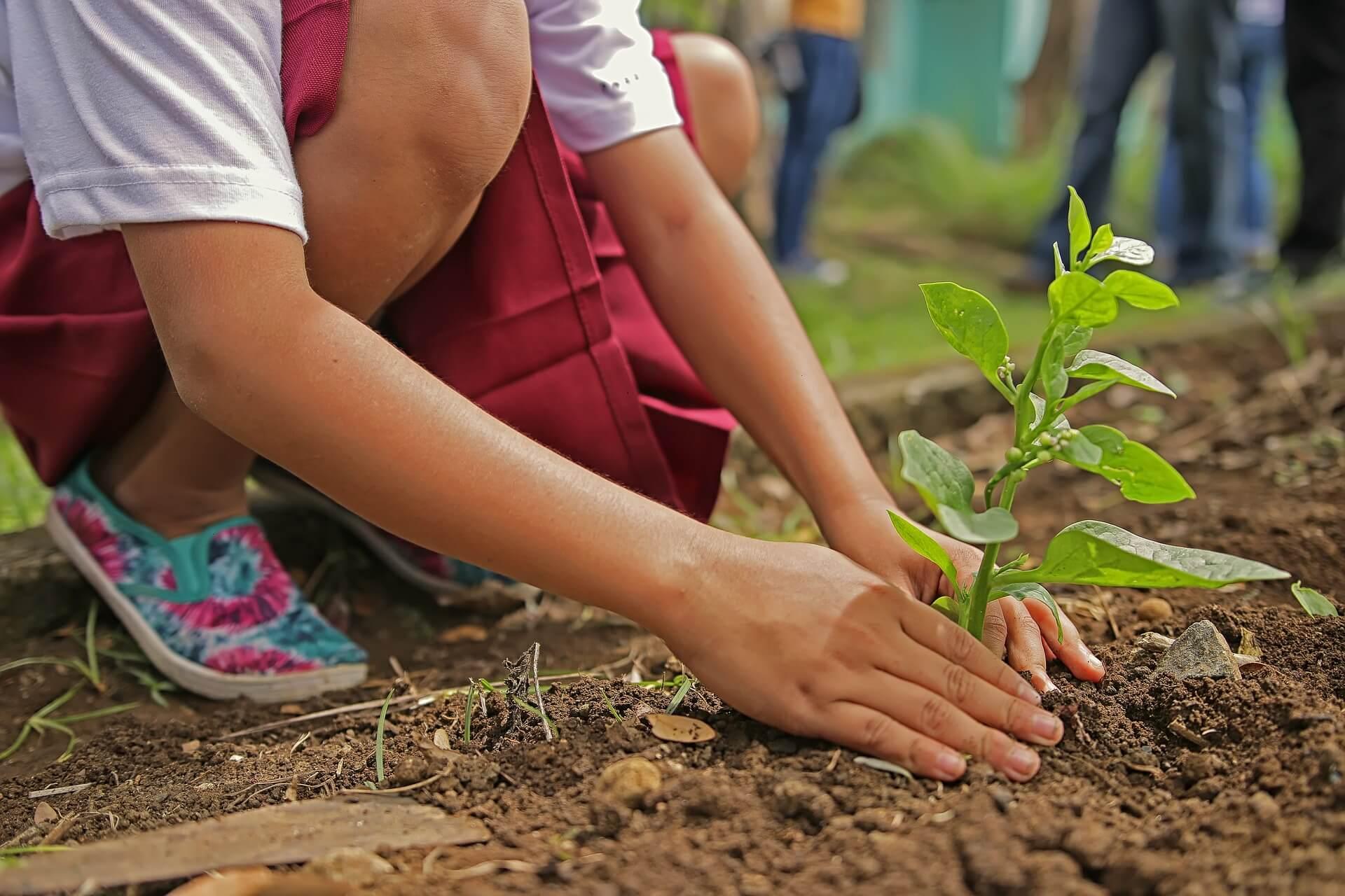Bonsai Baum kaufen pflege